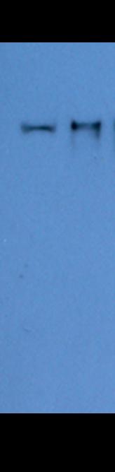 Image thumbnail for Anti-PIWIL3 [Z83]