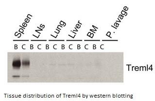 Image for Anti-Trem-like 4 [16E5]