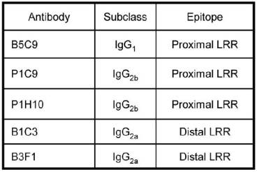 Summary of the IgG subclasses of five m5T4 specific monoclonal antibodies (mAb, made in 5T4KO mice) recognizing distinct epitopes in the proximal and distal 5T4 extracellular LRR containing domains.	