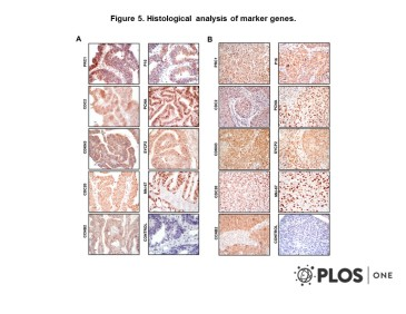 Adapted from Espinosa et al. 2013. PLoS One. 8(2):e55975. PMID: 23405241