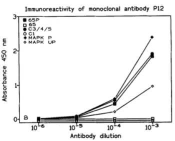 ELISA using clone 98/P12 to test its immunoreactivity against synthetic peptides and proteins. Source: Yon et al. 1995. J Neuroimmunol. 58(2):121-9. PMID: 7759601.