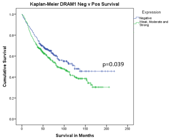 Survival curve comparing patients outcome categorised by expression of DRAM1 using Anti-DRAM1 [M3-P4B4]. Positive expression of DRAM1 was associated with decrease in patients survival (p=0.039).