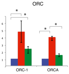 Adapted from Beck et al. GENES & DEVELOPMENT 26:2580–2589