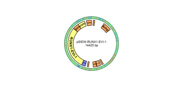 Image for pSIEW-RUNX1-EVI1 Vector