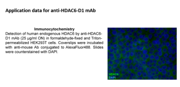 Image for Anti-HDAC6-D1 (2H3) mouse monoclonal antibody (D1 domain-specific)