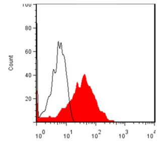 FACS analysis of cos-7 cells that were mock-transfected (white) or transfected with a plasmid containing the full-length LYPD3 open reading frame (red) were probed using anti-LYPD3 [11F1]. A FITC conjugated secondary goat anti-mouse antibody was applied for detection purposes.