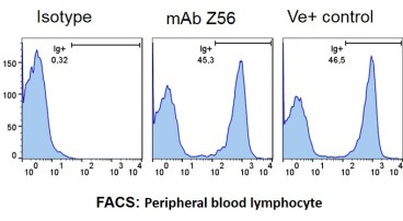 FACS analysis of Z56P1H5*G6 - Peripheral Blood Lymphocyte