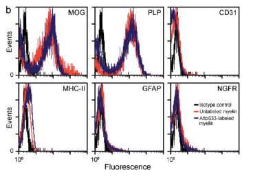 Clone PLPC1 used to characterize PLP using Flow Cytometry.  The resulting myelin particles were characterized by FACS using microglial (MOG and PLP), endothelial (CD31), microglial (MHC-II), astrocytic (GFAP) or neuronal (NGFR) markers (representative of n > 3 donors). Source: García-Vallejo JJ, et al. J Exp Med. 2014 Jun 30;211(7):1465-83.