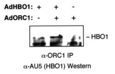Adapted from Burke et al. THE JOURNAL OF BIOLOGICAL CHEMISTRY Vol. 276, No. 18, Issue of May 4, pp. 15397–15408, 2001