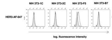Adapted from Vollmann-Zwerenz et al. 2010. Cytometry A; 77(4):387-98. PMID: 20151455. Figure. NIH3T3  cells were stained for flow cytometry. Gray histograms represent control measurements without HER antibodies; white overlayed histograms represent the measurements of anti-HER3 receptor stainings. NIH3T3-1C: HER1-transfected cells; NIH3T3-2C: HER2-transfected; NIH3T3-F5: HER3-transfected; NIH3T3-B7: HER4-transfected.