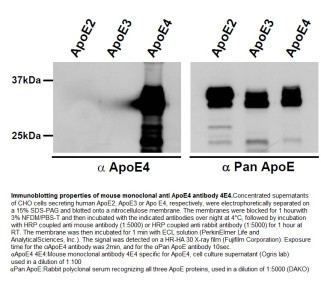 Image for Anti-Apolipoprotein E4 [4E4]