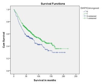 Survival curve comparing patients outcome categorised by expression of DIAPH2 using anti-DIAPH2 [V78P3C10*D3]. Strong expression of DIAPH2 was associated with decrease in patients survival (p=0.012).  All monoclonal antibodies developed by Vertebrate Antibodies Ltd have been independently validated by the Department of Pathology, University of Aberdeen and the Grampian Biorepository. Each antibody has been tested by immunohistochemistry against a multi-tumour tissue microarray containing 16 tumour types matched with normal tissues. To identify clinical significance of targets of interest, corresponding antibodies have also been used to screen a large colorectal cancer tissue microarray (n=650). For further information and future collaboration please contact Professor Graeme Murray (g.i.murray@abdn.ac.uk).