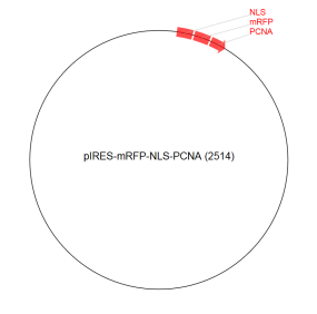 Image for pIRES-mRFP-NLS-PCNA (2514) Vector
