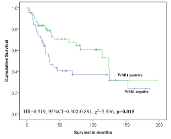 Survival curve comparing patients outcome categorised by expression of WSB1 using Anti-WSB1 [K5P2H10*E10]. Positive expression of WSB1 was associated with improved patients' outcome in MMR defective  colorectal cancer tumours (p=0.015). The peptide immunogen used to generate the antibody is identical in mouse (Mus musculus), rat (Rattus norvegicus), sheep (Ovis aries), bovine (Bos taurus), dog (Canis familiaris) and horse (Equus caballus).
