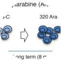 Schematic diagram illustrating generation of cytarabine-resistant cell line variants. The MOLM-13 and SHI-1 cells were treated with escalating doses of cytarabine drug till the resistant cells grew at the equal proliferation rate of parental cells. The parental cells were cultured along with resistant cells to be used as controls to nullify possible effects of long-term cell vulture. All ten cell types were authenticated for authenticity and purity