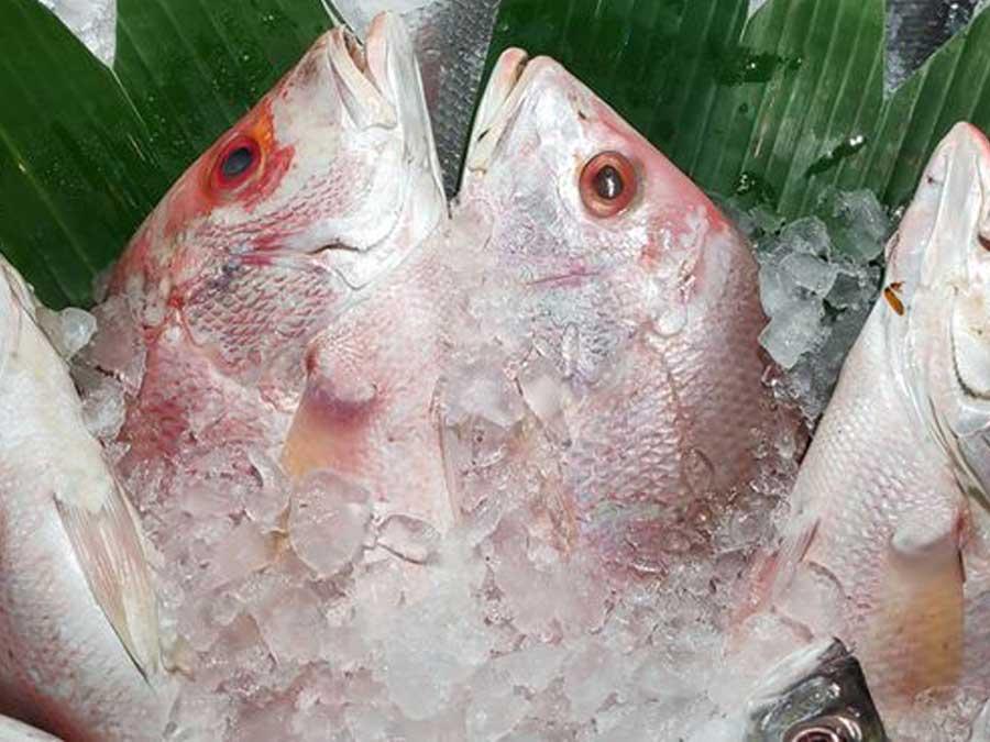 Tip Menyimpan Ikan