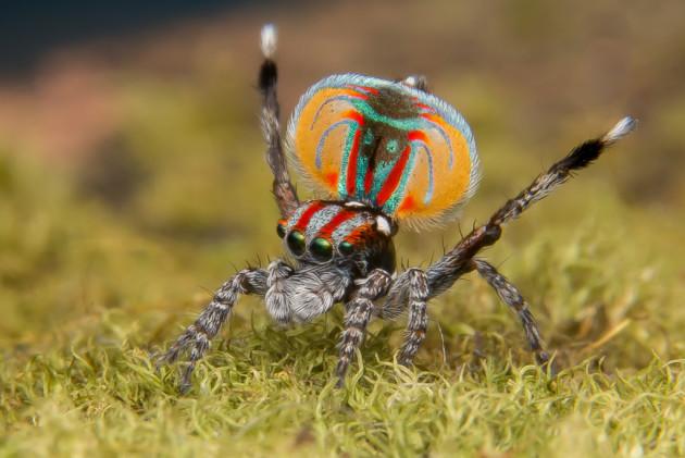 10 Expert Macro Tips: Shooting Spiders - Australian ...