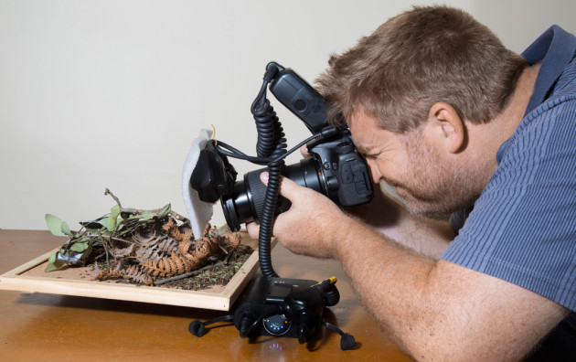Michael Duncan photographing on his custom diorama, a lazy susan he uses to imitate the spiders habitat and manipulate their positions.