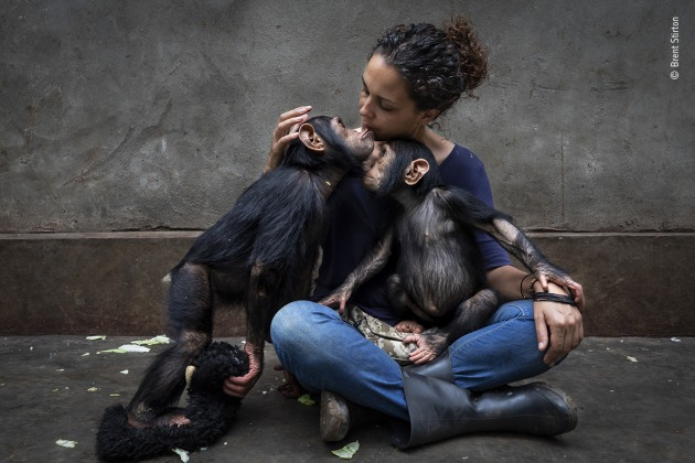 The healing touch, from Community care by Brent Stirton, South Africa, Winner, Photojournalist Story Award. Brent Stirton (South Africa) profiles a rehabilitation centre caring for chimpanzees orphaned by the bushmeat trade. Canon EOS 5D Mark IV + 16–35mm lens; 1/250 sec at f5.6; ISO 400.