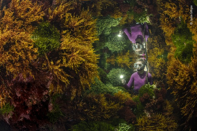 Rich reflections by Justin Gilligan, Australia, Winner, Plants and Fungi Justin Gilligan (Australia) creates the reflection of a marine ranger among the seaweed. At the world's southernmost tropical reef, Justin wanted to show how careful human management helps preserve this vibrant seaweed jungle. With only a 40-minute window where tide conditions were right, it took three days of trial and error before Justin got his image. Impacts of climate change, such as increasing water temperature, are affecting the reefs at an ever-increasing rate. Seaweed forests support hundreds of species, capture carbon, produce oxygen and help protect shorelines. Nikon D850 + Sigma 15mm f2.8 lens 1/160 sec at f13 ISO 400 Nauticam housing twin Ikelite DS161 strobes + sync cord.