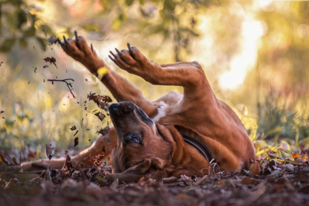 Dogs at Play Category 3rd Place Winner, Angela Blewaska, Germany