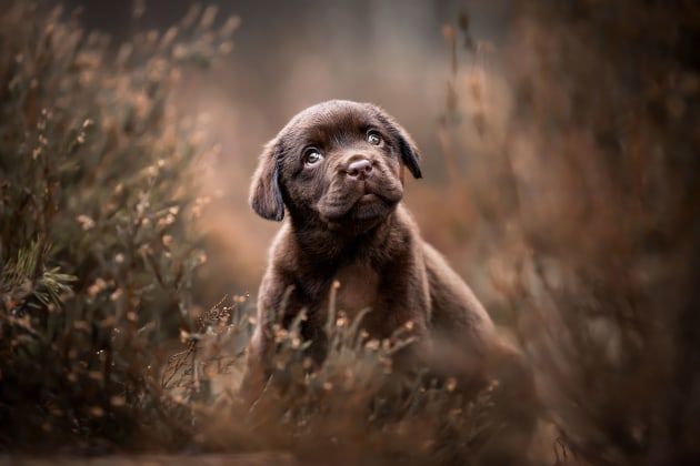Puppy's Category 3rd Place Winner. Lotte van Alderen, Netherlands