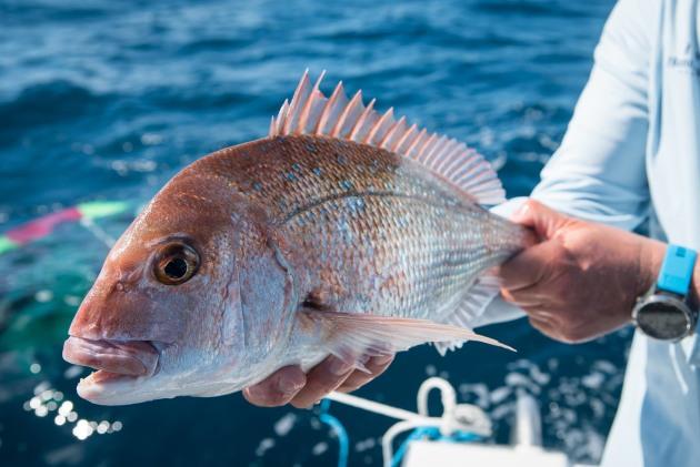Major changes to Queensland fisheries regulations - Fishing