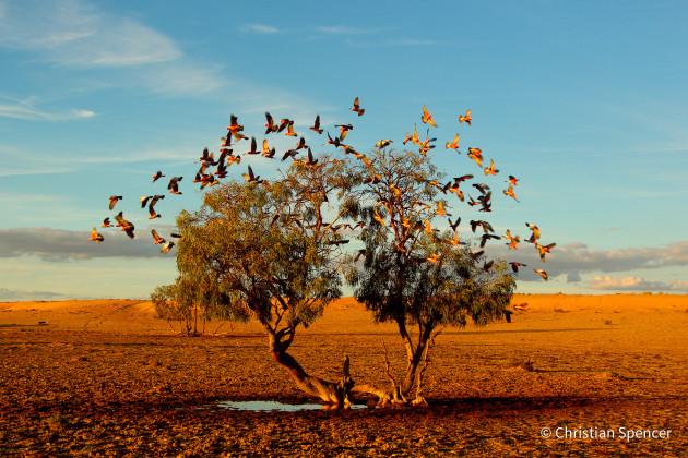 © Christian Spencer - Animal Habitat Category Winner - Australian Geographic Nature Photographer of the Year 2021