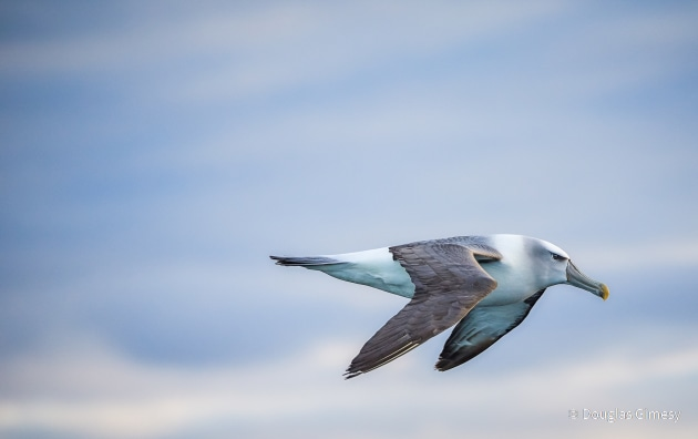 © Douglas Gimesy - Animal Portrait Category Winner - Australian Geographic Nature Photographer of the Year 2021