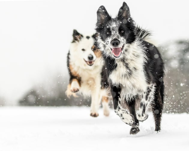 Special Mention Dogs at Play category, Louise Farrell, UK