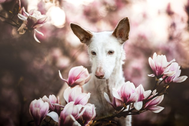 Dog Photographer of the Year 2019 Overall Winner and Oldies Category 1st Place Winner, Denise Czichocki, Switzerland