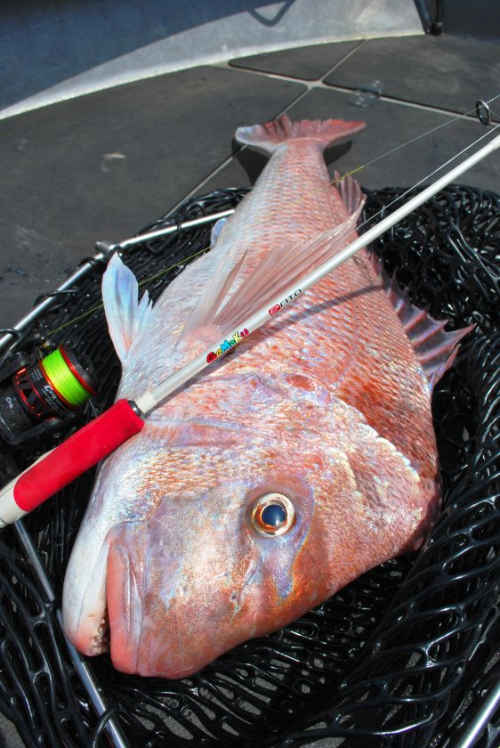 Light Tackle Micro Jigging For Snapper Tuna And Kingfish Fishing World