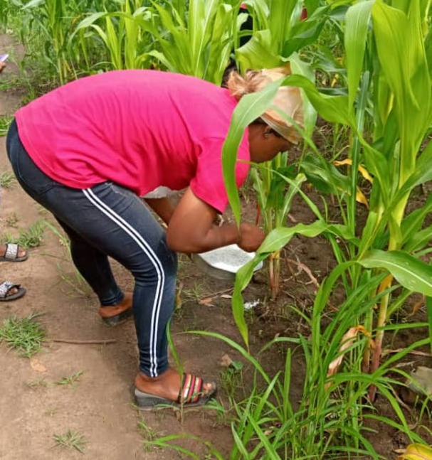 Young Women Entrepreneurship : she succeeds in harvesting 2.5 tonnes of maize to launch her poultry project