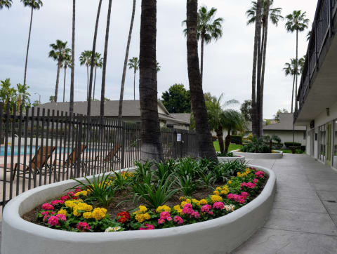 Beautiful Planter Combinations at Terramonte Apartment Homes, California, 91767