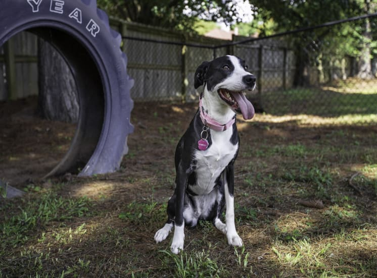 spotted dog sitting beside tire in bark park