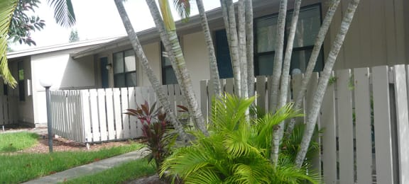 Palm trees and ferns in front of patio at Heronwood.