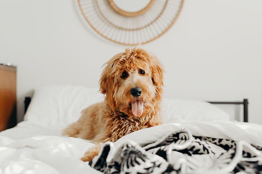 Pet friendly at San Tropez Apartments & Townhomes, Utah