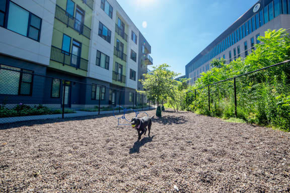Bark Park with Agility Equipment at CityWay, Indianapolis, Indiana