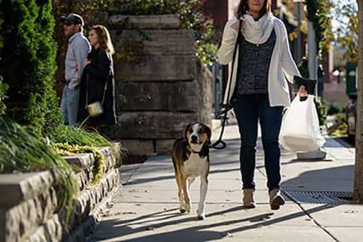 Walking With A Dog at CityWay, Indianapolis, IN, 46204