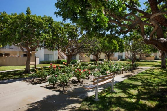 Rose Garden in our community, at Shepard Place, Carpinteria