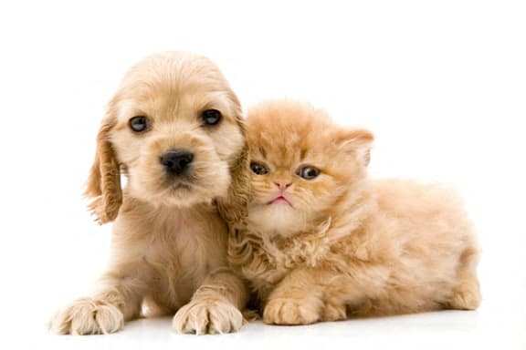 Dogs and Cats are Welcome at Normandy Village Apartments in Michigan City, IN