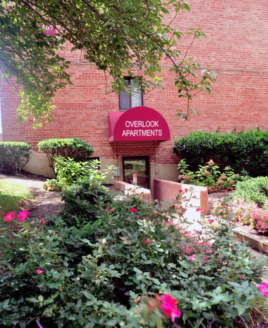 exterior view of leasing office entrance at Overlook apartments Hyattsville MD with flowers and tree in foreground