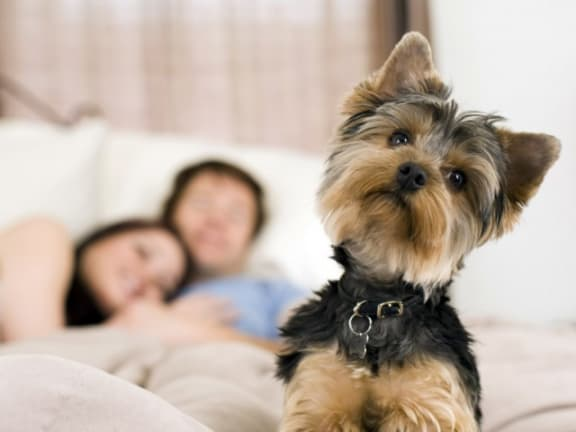 Pet Friendly l The Trails at Pioneer Meadows Apartments in Sparks NV
