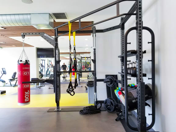 Weight Equipment at the Fitness Center