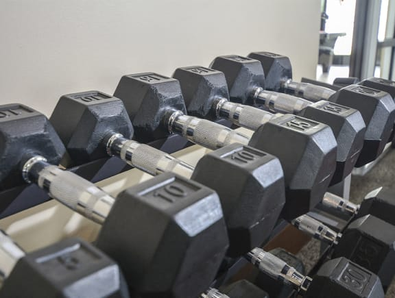 Free Weights at the Fitness Center