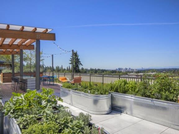 Community Organic Garden at Liv Apartments, Bellevue, 98007