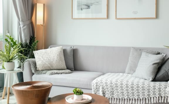 Gray couch with coffee table, plants, and pillows nect to window