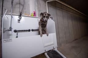 Pet Wash Station in the Underground Garage