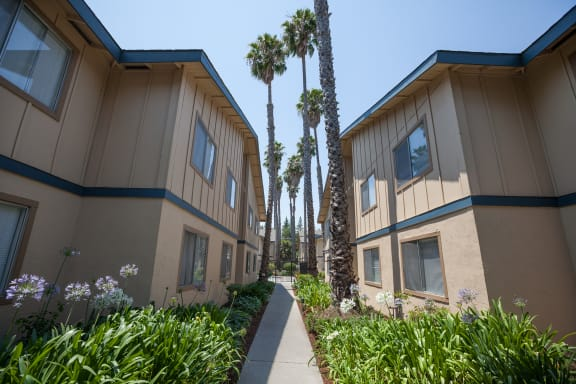 Beautiful Courtyard With Walking Paths at Cedartree, Santa Clara