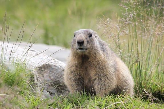 Groundhog Day at Ralston Courtyards, Ventura, 93003